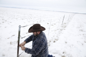 Oregon Protesters Liberate Neighborhood Cattle